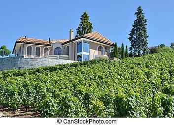 Vineyards in Lavaux, Switzerland
