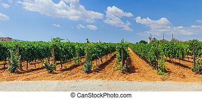 Vineyards in Mallorca. Spain. Panorama