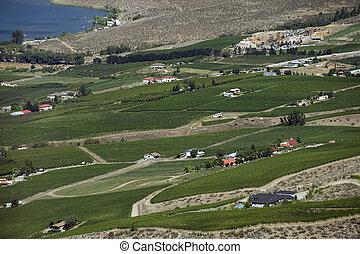Vineyards in Okanagan