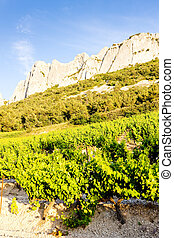 vineyards in Provence, France