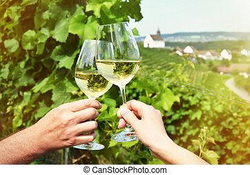 Vineyards in Rhine region, Switzerland
