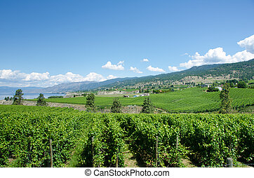 Vineyards in the Okanagan Valley