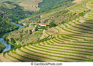 River Douro - Vineyards in the Valley of the River Douro, ...