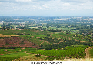 Vineyards in the wine making region of Beaujolais, France