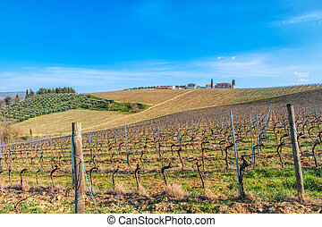 Vineyards in Tuscany Italy. Province of Siena