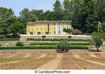Farm with vineyard in Var (Provence-Alpes-Cote d'Azur, France) at summer