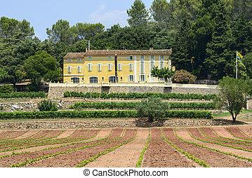 Farm with vineyard in Var (Provence-Alpes-Cote d'Azur, France) at summer