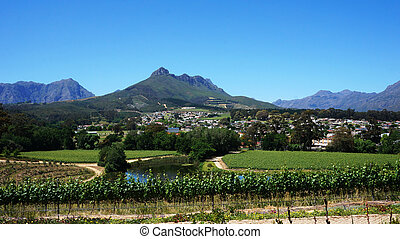 Vineyards in Western Cape, South Africa