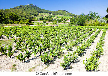 vineyards near Bandol, Provence, France