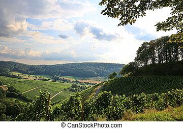 Vineyards near Castell in Lower Franconia