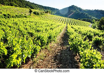 vineyards near Gigondas, Provence, France