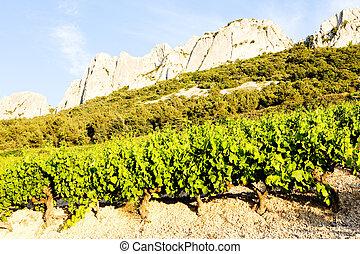 vineyards near Gigondas Provence, France