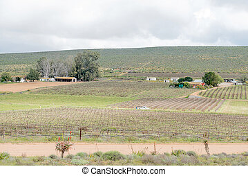 Vineyards near Lutzville