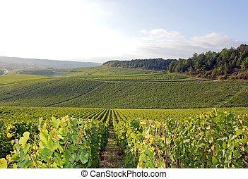 Vineyards of Chablis