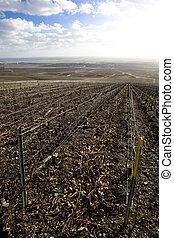 vineyards of Champagne Region, Burgundy, France