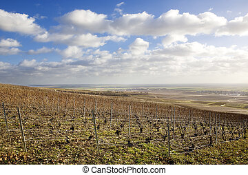 vineyards of Champagne Region, Burgundy, France