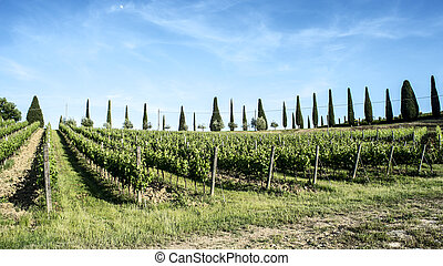 Vineyards of Chianti in Tuscany
