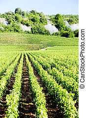 vineyards of Cote de Nuits, Burgundy, France