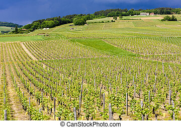 vineyards of Cote Maconnais, France - vineyards of Cote...