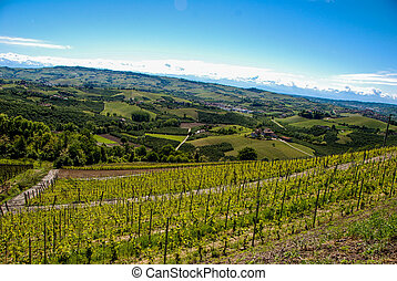 Vineyards of Langhe, Piedmont - Italy