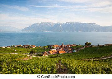 Vineyards of the Lavaux region, Switzerland