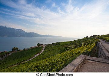 Vineyards of the Lavaux region, Switzerland