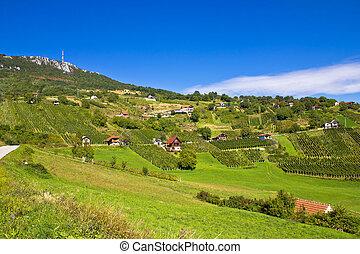 Vineyards on Kalnik mountain slopes, Prigorje, Croatia