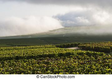 Vineyards on Misty Morning