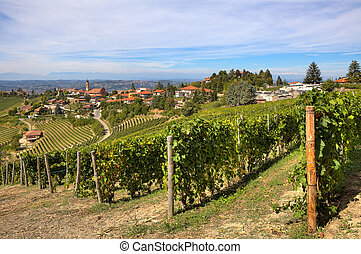 Vineyards on the hills and small town in Italy.