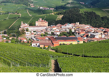 Vineyards on the hills in Italy