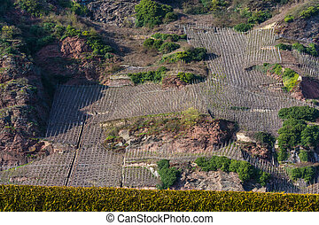 Vineyards on the Mosel river in spring.
