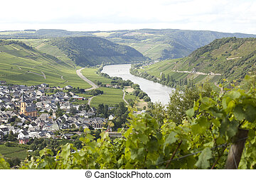 Vineyards on the Mosel - Vineyard and vilage on Mosel river....
