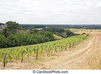 Vineyards, Rochefort sur Loire
