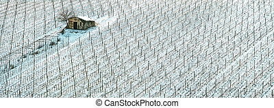 Vineyards rows covered by snow in winter, a rural small house and tree.  Chianti countryside, Florence, Tuscany region, Italy