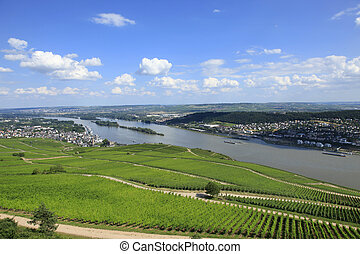 Vineyards Rudesheim Germany - Rows of Vines on the River...
