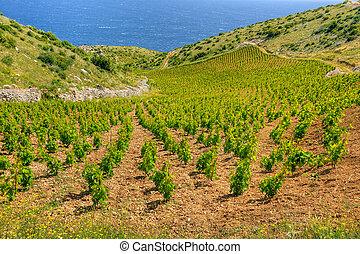 Vineyards, southern coast of Hvar island, west of Sveta...