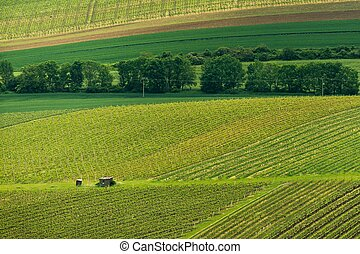 Vineyards, spring, Moravia