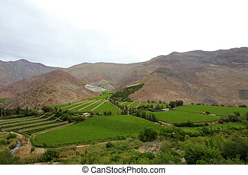 Vineyards used for Pisco in the dry Elqui Valley, Chile