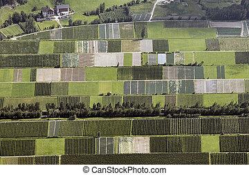 Vineyards valley