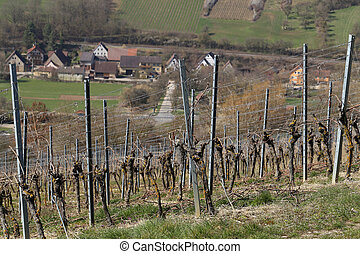 Vineyards. Vineyards in the winter in Germany.
