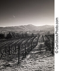 Infrared photo of vineyards in the Willamette Valley