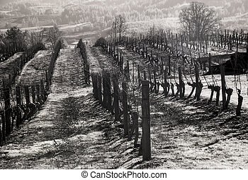 Vineyards, Willamette Valley in Infrared - Infrared photo of...