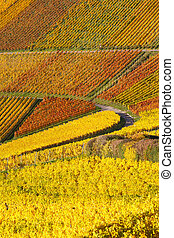 Vineyards wine autumn fall season colorful leaves nature ...