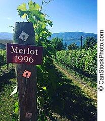 Vineyards with closeup of sign. Merlot 1996
