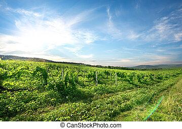 vingård, Bjerge