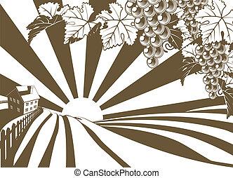 vingård, druva, grafisk, vin, soluppgång