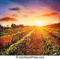 vingård, landskab