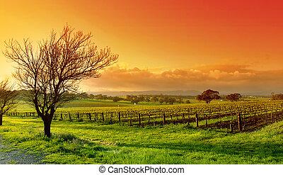 vingård, landskap