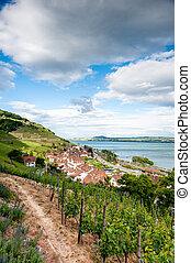vingård, lantlig, landskap
