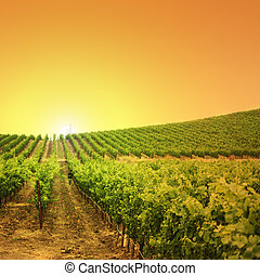 vingård, på, en, høj